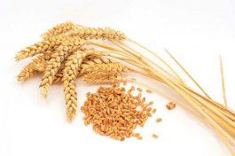 Quà tặng cuộc sống: Câu chuyên hai hạt lúa