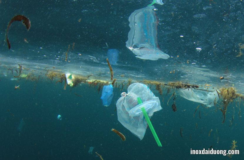 Sử dụng ống hút nhựa quá nhiều, chúng ta nợ môi trường một lời xin lỗi!